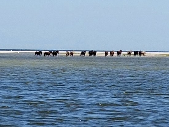 Beaufort, Carolina do Norte: Wild horses in surf