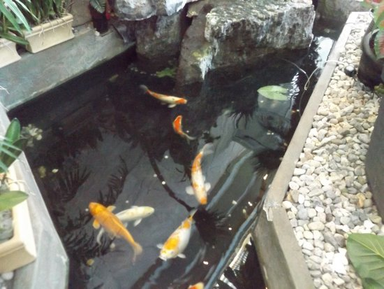 Mandarin Restaurant: Fish pond inside