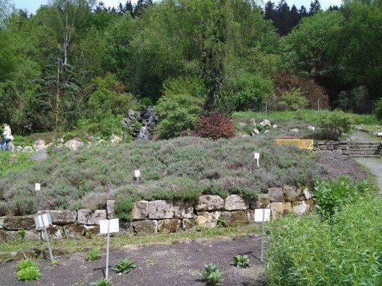 Altenau, Alemania: Wasserfall und Lavendel