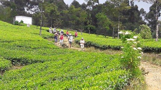 Bandarawela, Sri Lanka: Trekking in Sri lanka
