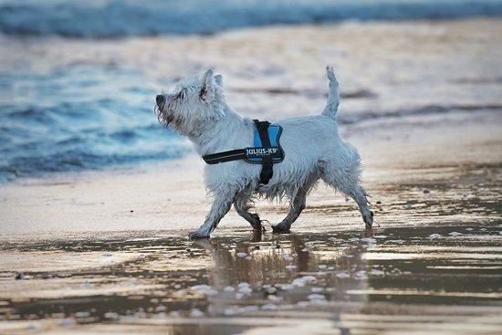 St Bees Beach Dog Friendly