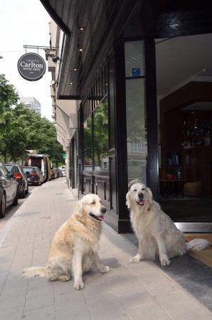 Hotel Carlton: Dog friendly..