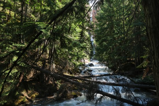 Kootenay National Park, Καναδάς: The falls can be see through the trees the sound here is amazing.