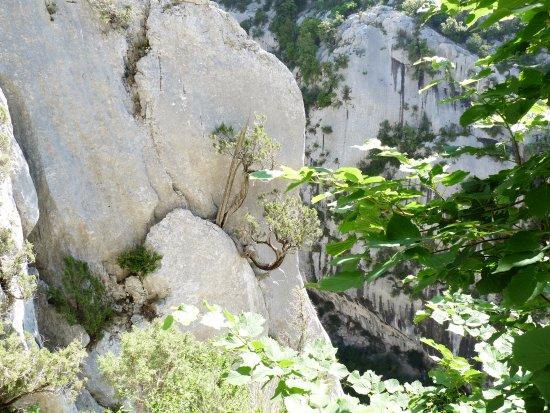 Sentier Blanc-Martel: des arbres dans la roche