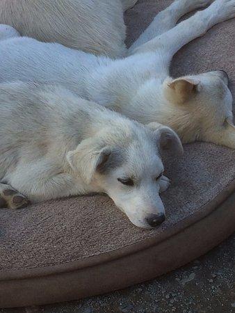 Tagish, Canadá: Cute puppies