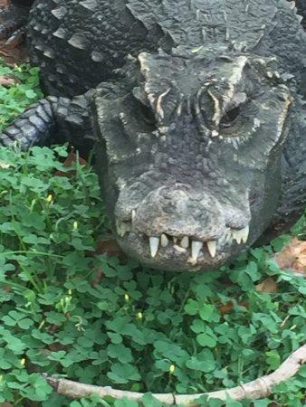 Crocworld Conservation Centre: photo1.jpg