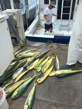 Drop Back Fishing Charters: photo0.jpg