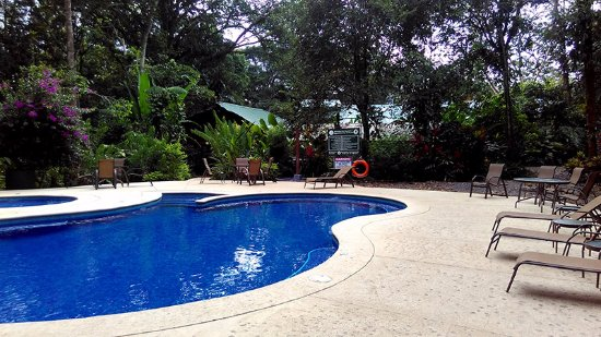 Selva Verde Lodge : Pool