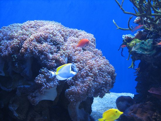birch aquarium at scripps tropical fish exhibit