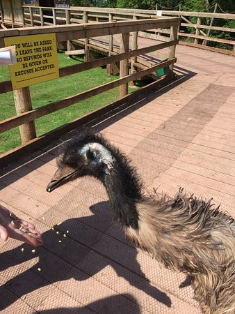 The Lake District Wildlife Park: Emu