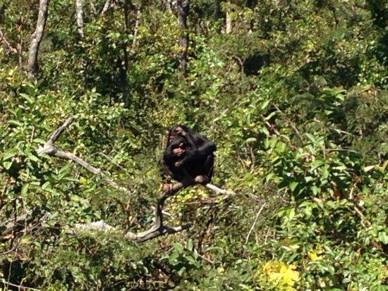 Chingola, Zâmbia: photo5.jpg