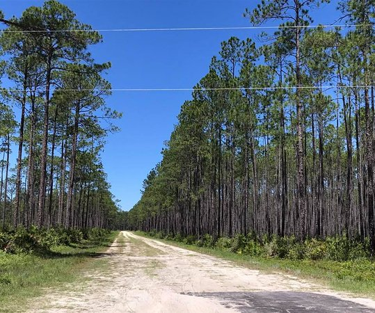 Apalachicola National Forest: trilhas