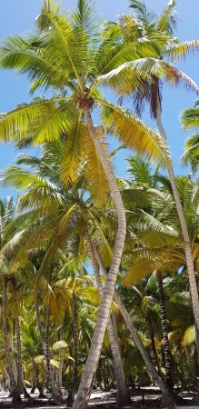 Bayahibe, جمهورية الدومينيكان: paysage