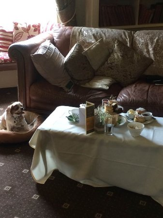 Little Weighton, UK: Tess enjoying her stay while I attempted to make a dent in the Afternoon Tea