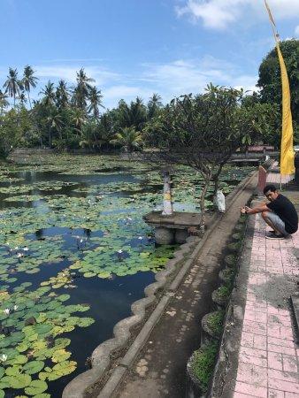 Kerobokan, Indonesia: photo4.jpg