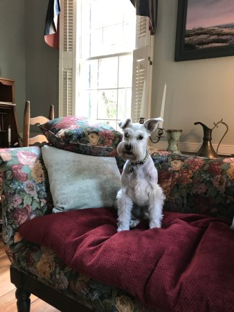 Armstrong Inns Bed and Breakfast: Bella loved her mini vacation at Armstrong Inn