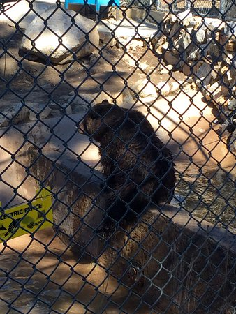 Big Bear Alpine Zoo at Moonridge รูปภาพ
