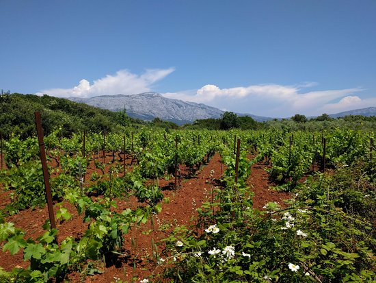 Korcula Island, Croatia: Vineyards & the Peljesac Peninsula on the bike & wine tour w/ John