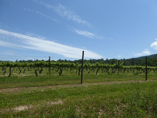 Cedar Creek Winery: Vines
