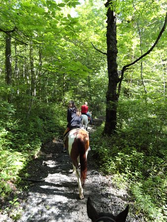 Smokemont Riding Stables: Scenic, peaceful ride through the Smoky Mountains.