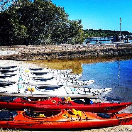 Yamba, Australia: Kayaks lined up ready for a tour.
