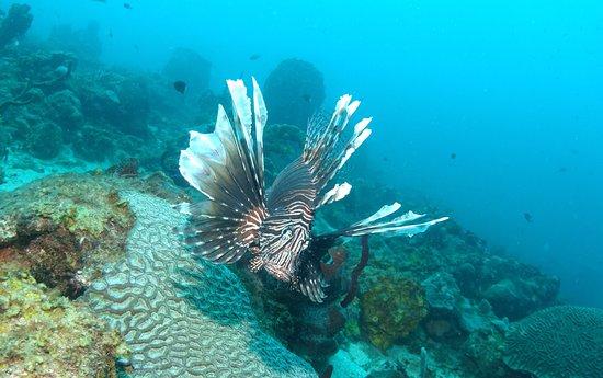 Scuba Steve's Diving Ltd.: photo6.jpg