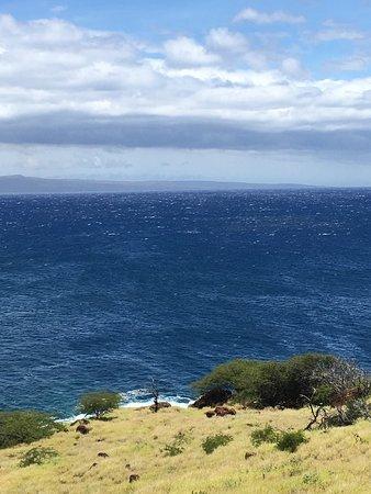 Shores of Maui: photo0.jpg