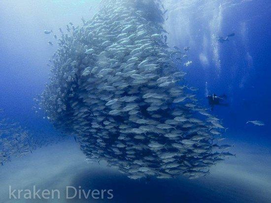 Kraken Divers