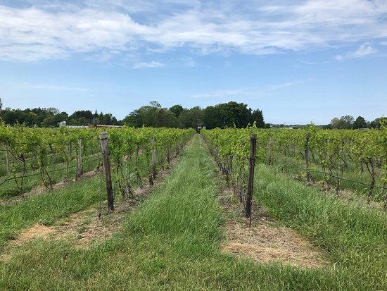 Johnson Estate Winery: photo1.jpg
