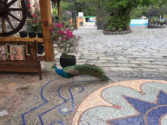 Samari Spa Resort: photo1.jpg