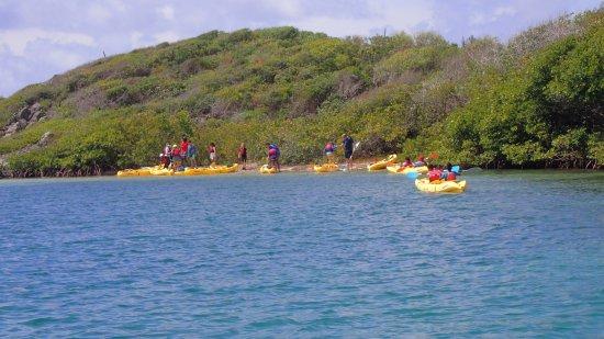 Virgin Islands Ecotours: First stop - Long Beach