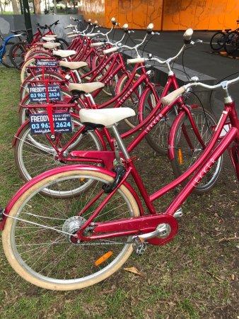 Freddy's Bike Tours: photo3.jpg