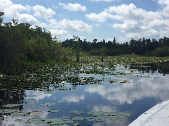Folkston, GA: Stopping off to admire the water lilies and the wildlife.