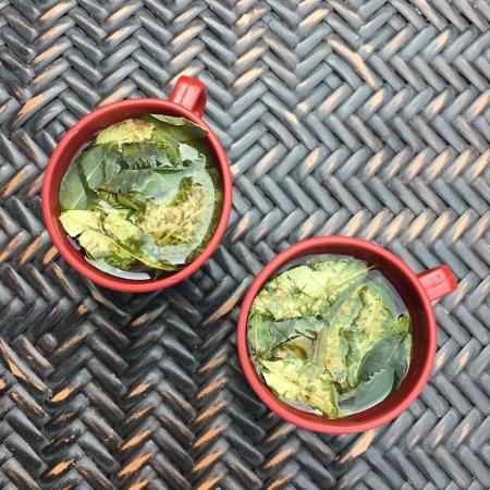 Ecopackers: Unlimited Coca Tea