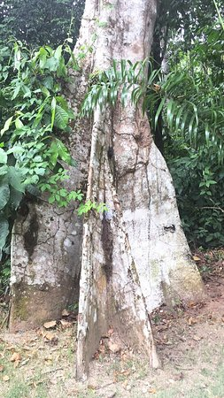 Ji-Paraná, RO: photo4.jpg