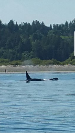 Port Townsend, WA: James Island CA orcas
