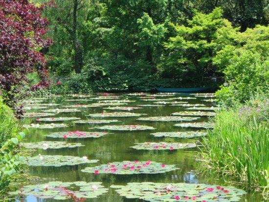モネの池のスイレン - 北川村北川村 莫內的花園的圖片 - TripAdvisor