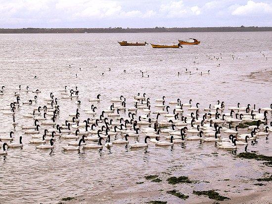Isla de Chiloé, Chile: Santuario de aves en Caulin