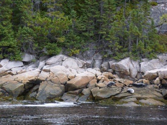 Tadoussac, Canada: Croisière aux baleines