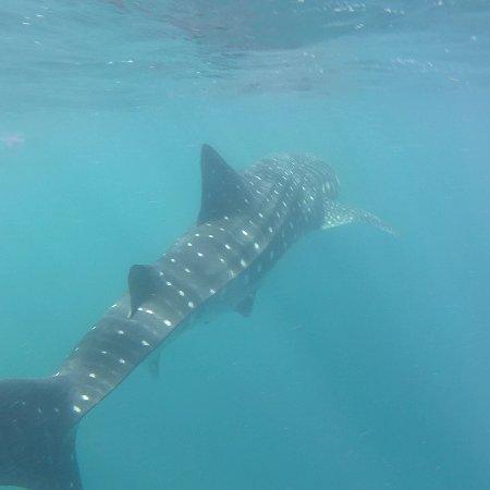 Ningaloo Blue Dive: IMG_20170605_113601_303_large.jpg