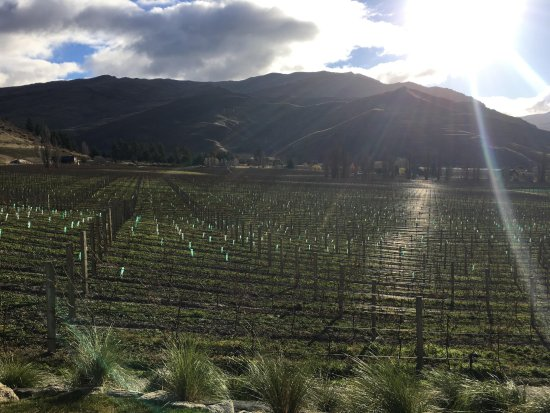 Appellation Central Wine Tours: A view of the third vineyard we visited (I can't remember its name!)