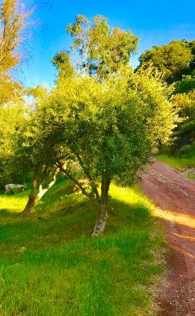 Ojai, CA: trees