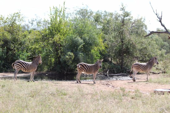 N'kaya Lodge: Zebra at the watering hole. Fantastic place.