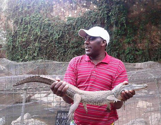 Kenya Safari Adventures