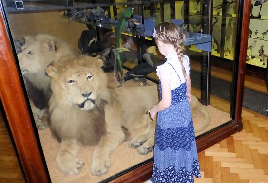 Large Stuffed Lion To Greet You When You Go In Picture Of Natural