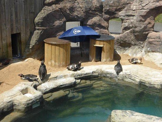 Gweek, UK: Cornish Seal Sanctuary