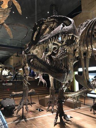 Kitakyushu Museum of Natural History & Human History: photo0.jpg