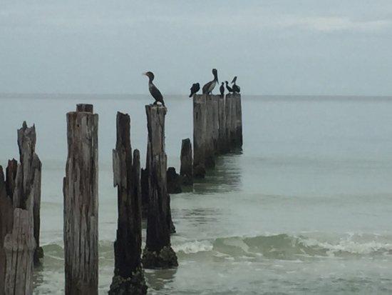 Estero Island Beach Club照片