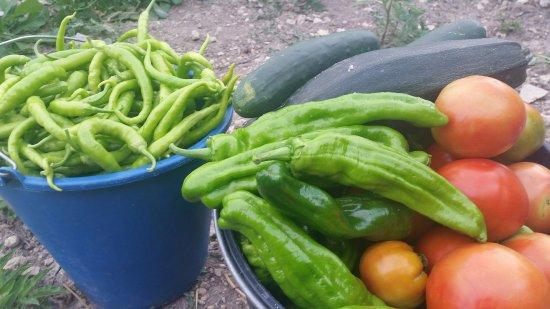 Casa Rural Basaula B&B: Agroturismo Basaula con huerta y animales en Navarra