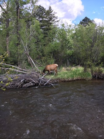 Paradise on the River: Female elk across the river from the grounds